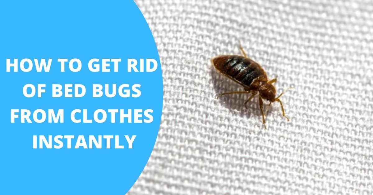 how do you get bed bugs out of your clothes